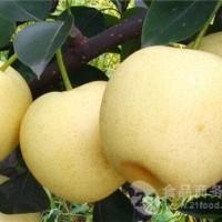 梨子产地批发