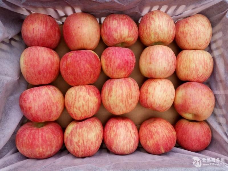 红富士苹果招商
