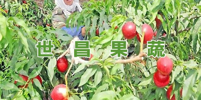 沂水县世昌果蔬购销中心招商