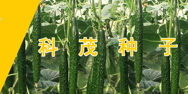 山东省寿光市科茂种子有限公司招商