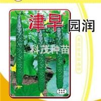 黄瓜种子:津早