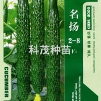 黄瓜种子:名扬2-8