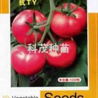 蕃茄种子:欧妍博F1