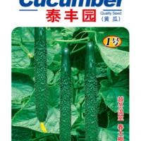 泰丰园1号——越冬温室黄瓜