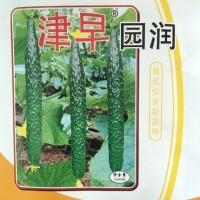 供应津早园润—黄瓜种子