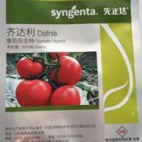 供应齐达利—番茄种子