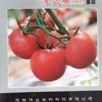 供应吉达丽—番茄种子