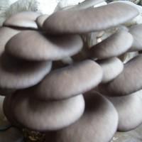 菌类生产基地,特色蘑菇推荐