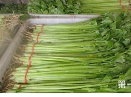 西芹的种植技巧要点 这一些要了解