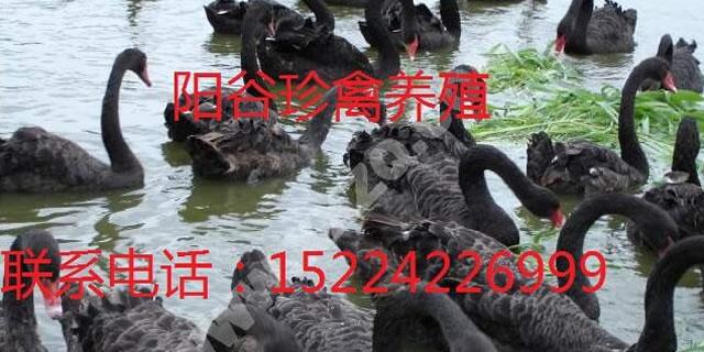 阳谷农之春珍禽养殖有限公司