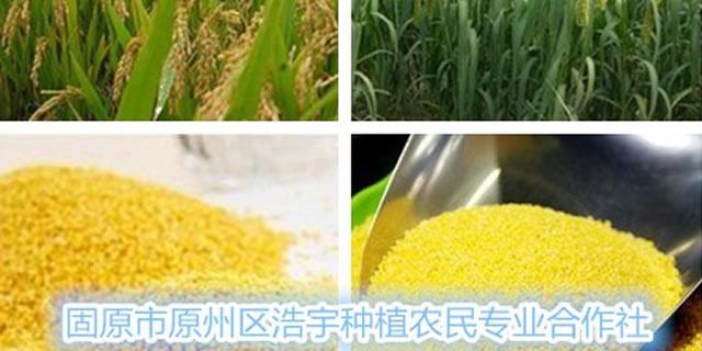 宁夏固原市原州区浩宇种植农民专业合作社招商