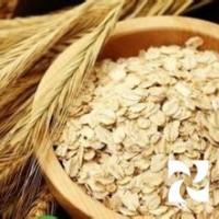 燕麦种子 燕麦精细粉
