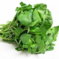 豆瓣菜种子 西洋菜种子豆瓣菜栽培