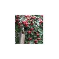 【山楂树价格】-最新山楂树价格、批发报价、价格大全_农商网